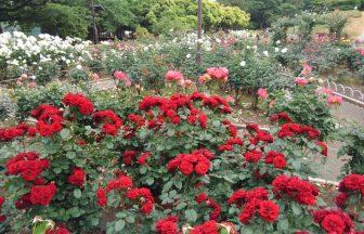 神奈川県 花園