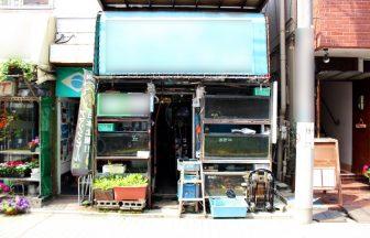 杉並区 熱帯魚店