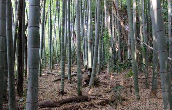 神奈川県 雑木林