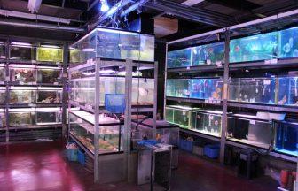 東京市内 熱帯魚ショップ