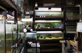 杉並区 熱帯魚屋
