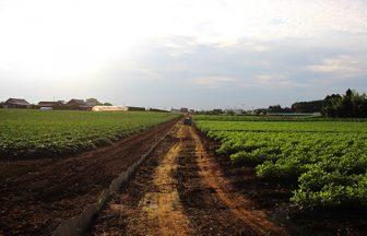 千葉県 畑