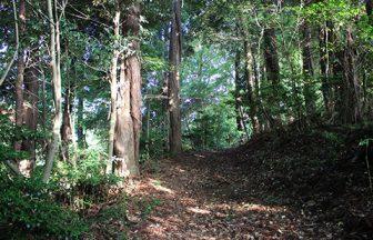千葉県 林道