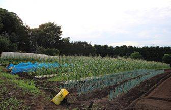 千葉県 家庭菜園