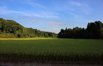 千葉県 田んぼ