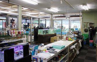 千葉県 観賞魚販売店