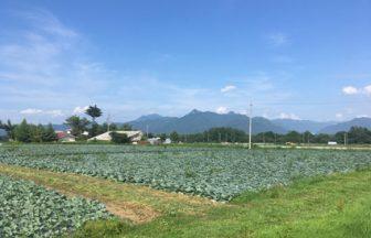 長野県 キャベツ畑