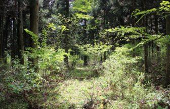 静岡県 森